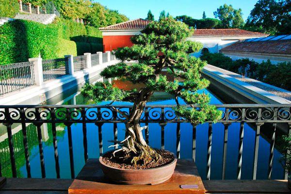 Pasos para el mantenimiento de un bonsai. Cómo cuidar, podar y regar un bonsai. Cuidados de un bonsai.