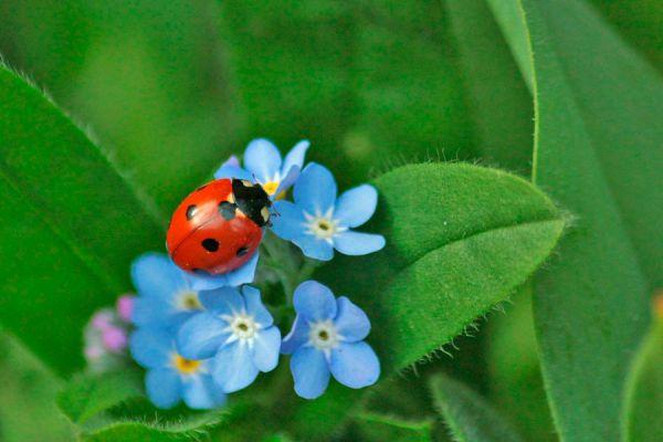C mo eliminar los insectos de las plantas for Como evitar que salga hierba en el jardin