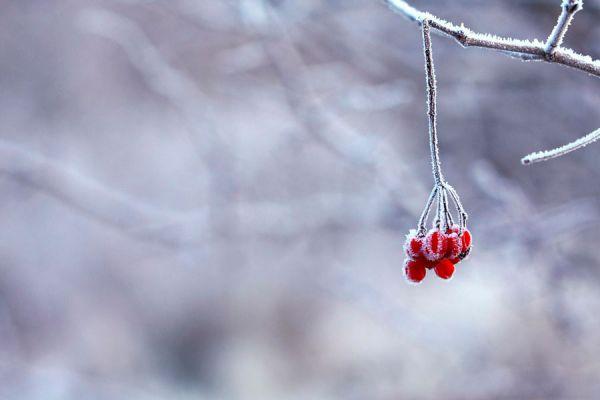 Como cultivar durante el invierno. Qué hacer en la huerta durante el invierno? Vegetales para plantar o sembrar en invierno