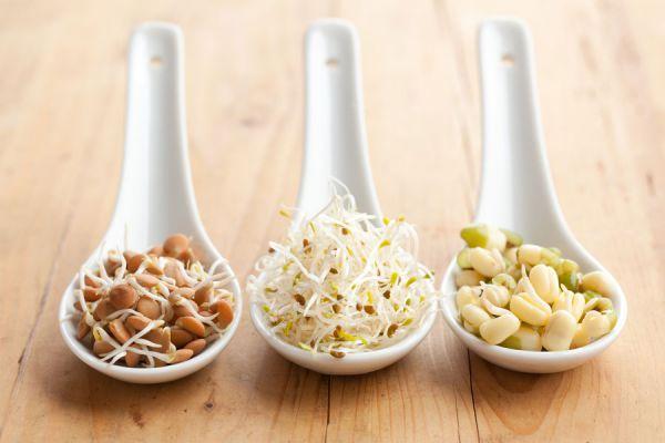 Guía para germinar semillas para su consumo. Proceso de germinado de semillas y legumbres. Pasos para germinar semillas en casa