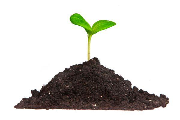 Procedimiento para germinar semillas en casa. Cómo consumir y producir semillas germinadas. Cómo germinar semillas en casa