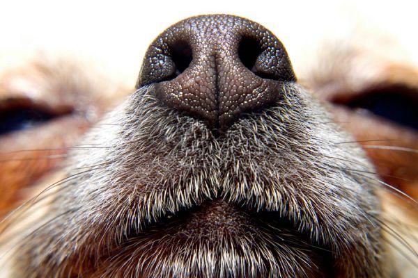 Métodos naturales para quitar el olor a perro del coche y los ambientes. Recetas caseras para quitar el olor a perro