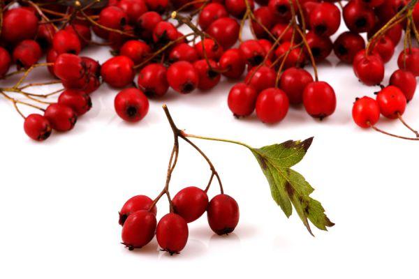 Beneficios y propiedades del aceite de rosa mosqueta. Qué contiene el aceite de rosa mosqueta? Usos y beneficios del aceite de rosa mosqueta