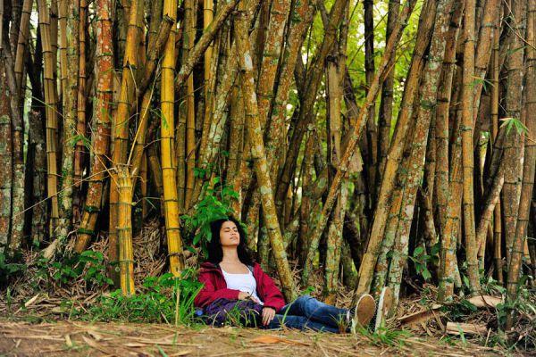 Guía para vacacionar haciendo turismo ecologico. Qué tener en cuenta para hacer ecoturismo. Viajar cuidando el medio ambiente