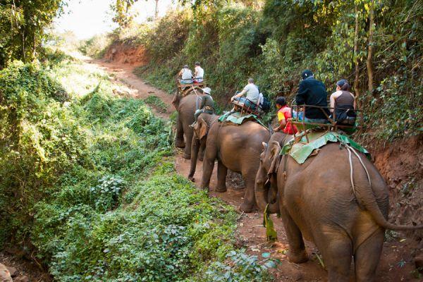 Tips para organizar un viaje por la selva. Cómo planificar una aventura por la selva.