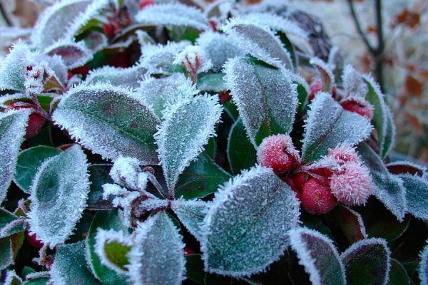Tips para prevenir las alergias en invierno. Métodos simples para evitar la alergia de invierno. Prevención de la alergia invernal