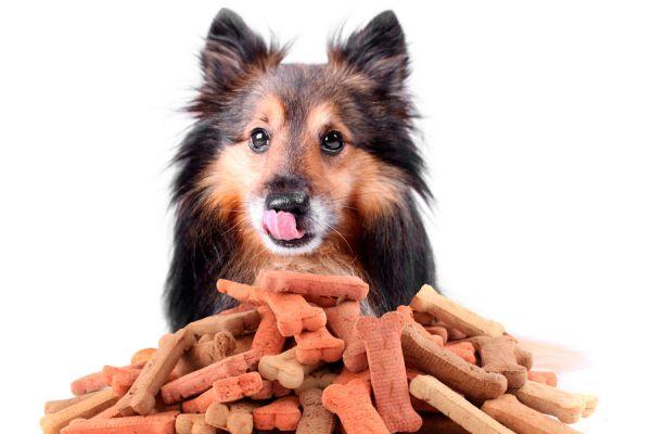 2 galletas caseras para perros. Recetas fáciles para hacer galletas para perros. Cómo preparar galletas caseras para tu perro