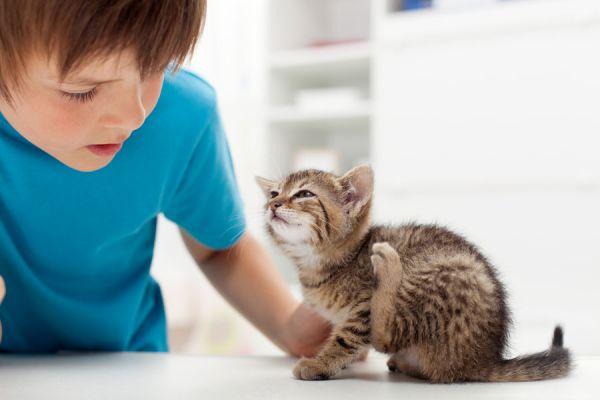 Receta casera para hacer un antipulgas natural. Cómo evitar las pulgas de tus mascotas con un producto casero. Cómo preparar un anti pulgas natural