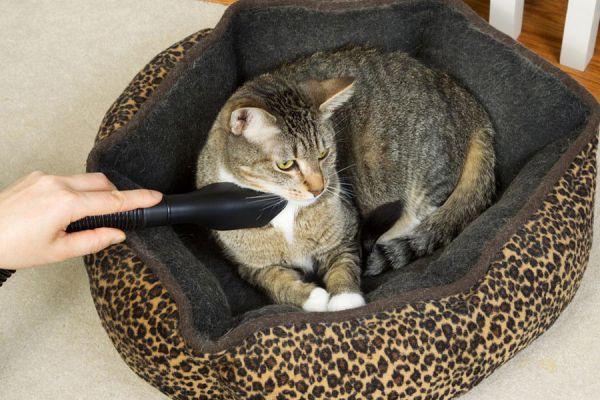 Métodos para prevenir pulgas y garrapatas. Cómo controlar las pulgas y las garrapatas de las mascotas. Tips para evitar plagas en tu mascota