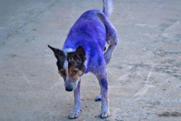 Cómo saber si el perro tiene sarna? Señales para reconocer la sarna en las mascotas. Tratamiento para curar la sarna del perro