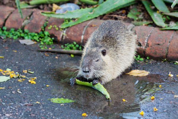 Plantas que debes evitar en tu jardín si tienes mascotas. Plantas tóxicas para perros y gatos. Lista de plantas peligrosas para animales