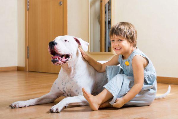 Sueños con perros, significado y simbolismo. Qué significa soñar con un perro salvaje. Significado de soñar con perros. El lenguaje de los sueños