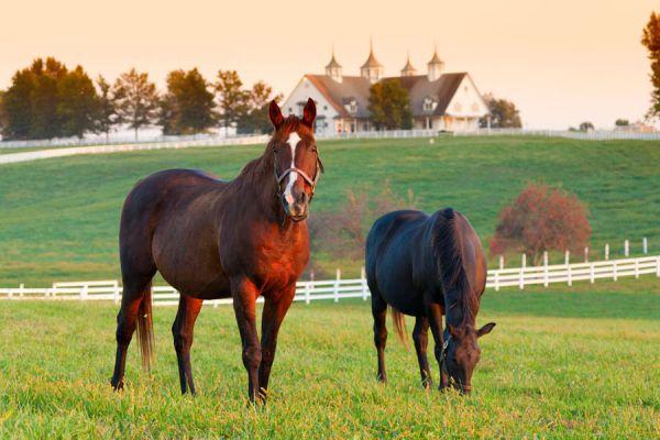 Sueños con caballos, significado y simbolismo. Qué significa soñar con un caballo. Significado de soñar montando un caballo. El lenguaje de los sueños