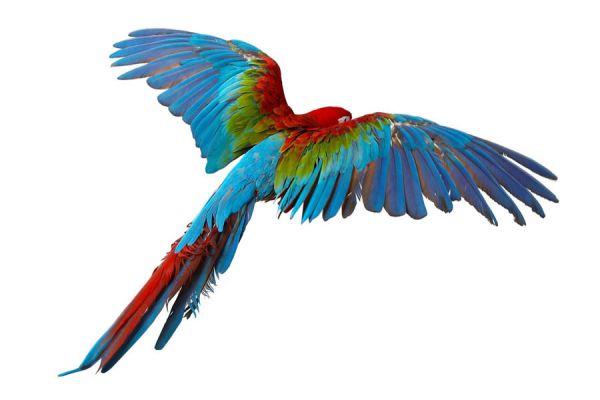 Interpretacion de los sueños: aves y palomas. El lenguaje de los sueños con palomas. Qué significa soñar con palomas mensajeras y otras aves