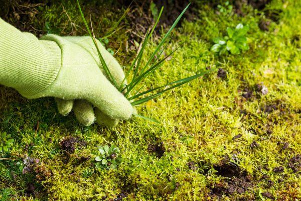 C mo controlar las malezas en el jard n for Como evitar que salga hierba en el jardin