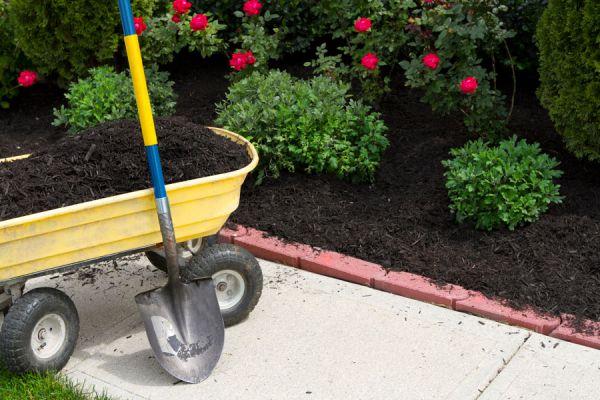 Guía para controlar las malezas en el jardín y canteros. Cómo evitar que las malezas invadan el jardín. Control de malezas con trucos simples
