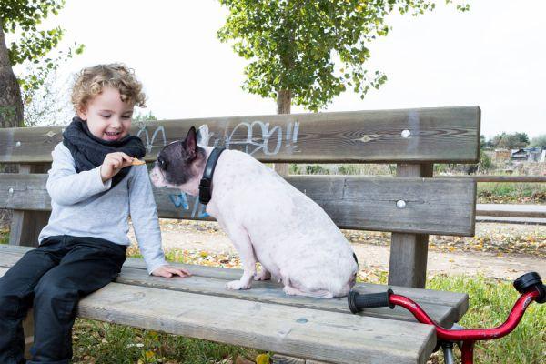 Recetas de golosinas para perros. Cómo hacer golosinas para perros. Cómo preparar golosinas para tu mascota