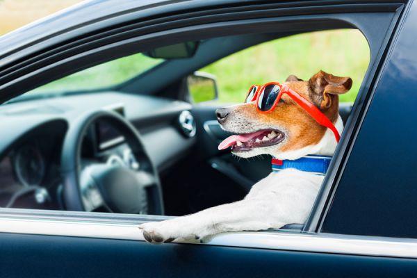 Claves para viajar con mascotas. Cómo hacer un viaje con mascotas. Consejos para viajar con tu perro o gato. Vacaciones con tu mascota