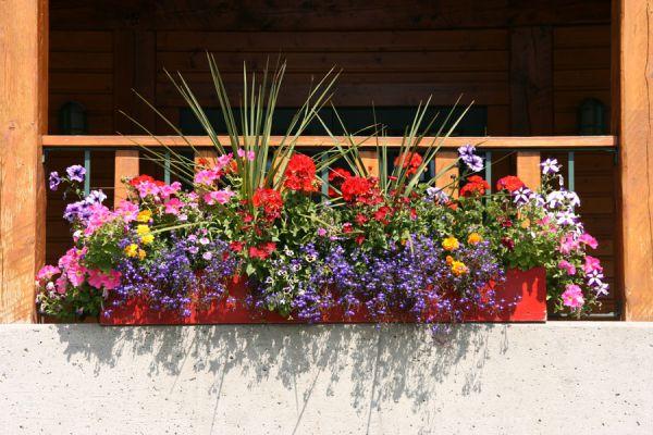 5 plantas ideales para cultivar en verano. Especies de plantas para el verano. Plantas fáciles de cuidar en verano.