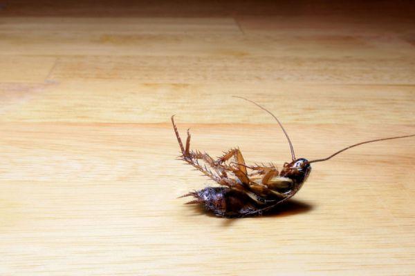 C mo eliminar las cucarachas - Remedios caseros para eliminar hormigas en casa ...