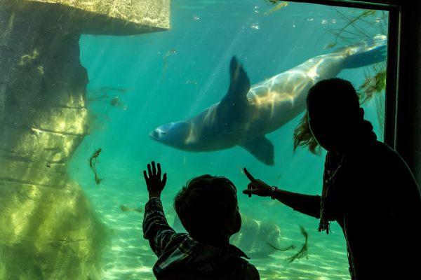 Consejos para ir de visita al museo con niños. cómo organizar una visita al museo con tus hijos. Planificar una visita al museo con niños