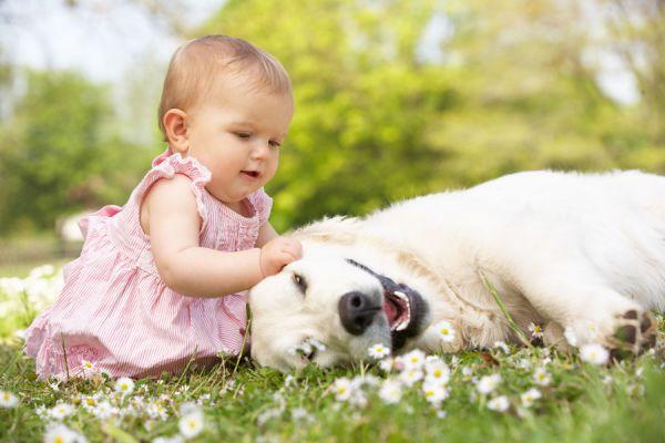 Razas de perros adecuadas para niños. Cómo elegir un perro para tu hijo. Qué raza de perro elegir para un niño? Cómo elegir un perro para tu hijo