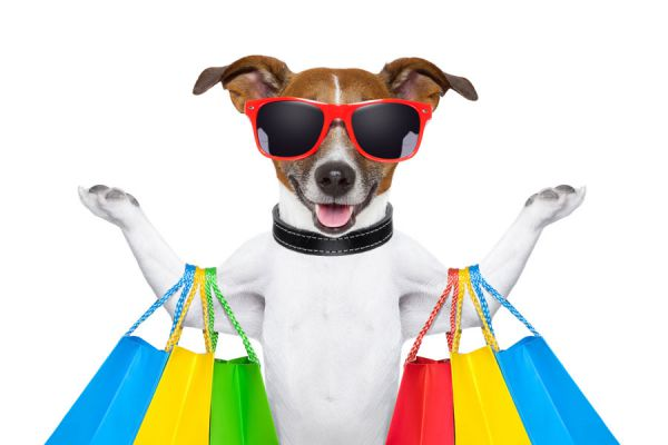 Mascotas graciosas y populares de instagram. Los animales más graciosos de las redes sociales. Fotos de mascotas graciosas en instagram