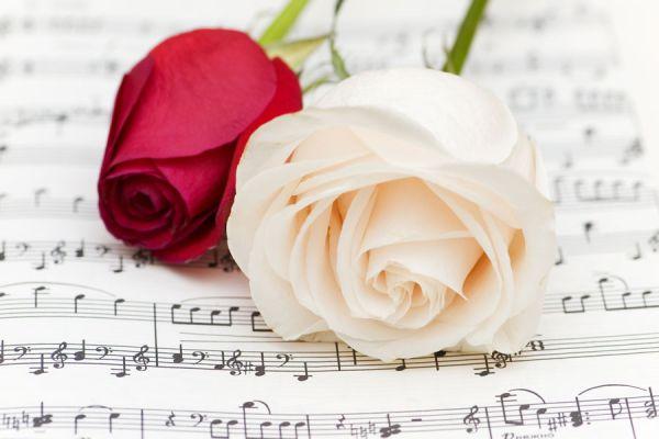 Las más populares supersticiones de las flores. Creencias y supersticiones sobre las flores. Cómo evitar la mala suerte en el hogar con flores