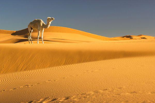 Claves para viajar al desierto. cómo hacer un viaje al desierto. Consejos para ir de viaje al desierto