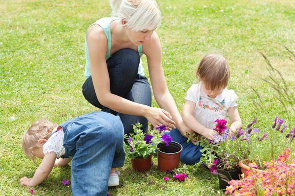 Especies de plantas y flores para atraer polinizadores. Cómo mejorar la polinización del jardín. Guía para atraer polinizadores a tu jardín