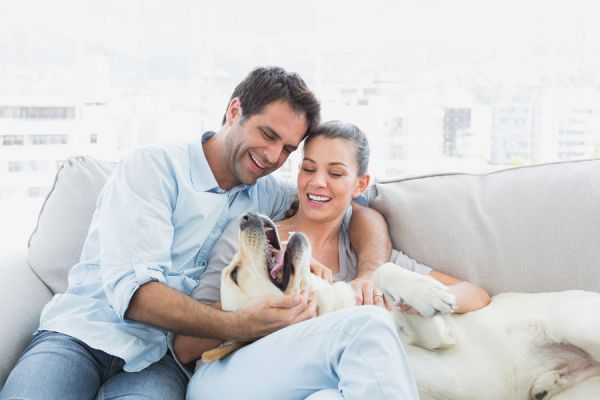 Claves para adoptar una mascota en pareja. Cómo ponerse de acuerdo en el cuidado de una mascota. Consejos para adoptar un perro en pareja