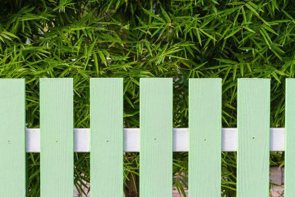 Las mejores variedades para cercos verdes. Las mejores especies de plantas para crear cercos verdes. Cómo hacer cercos verdes para tu jardín