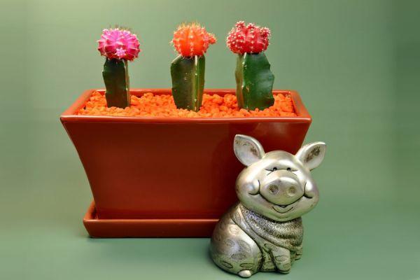 C mo pintar piedras y simular cactus for Tecnica para pintar piedras