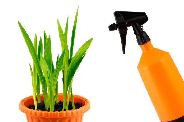 Tips para el mantenimiento y cuidado de las fresias. Cómo cultivar fresias en el jardín. Claves para plantar fresias en macetas y canteros
