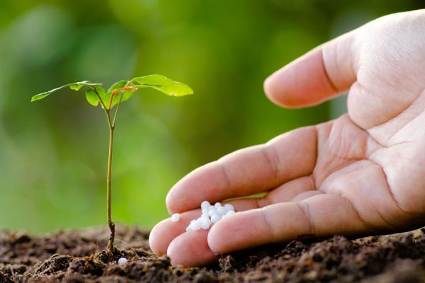 Cómo fertilizar las plantas. Métodos para fertilizar el jardín. Consejos para fertilizar las plantas del jardín. Fertilizantes caseros para el jardín