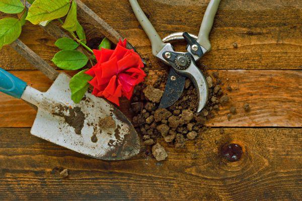 10 pasos para plantar un rosal. Cómo cuidar y plantar rosales. Consejos para cultivar rosas. Cómo preparar la tierra para plantar un rosal