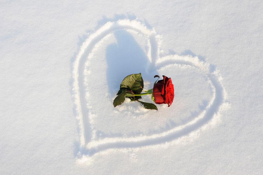 Cómo proteger las rosas durante el invierno. Consejos para cuidar los rosales en invierno. Tips para el cuidado de las rosas en invierno