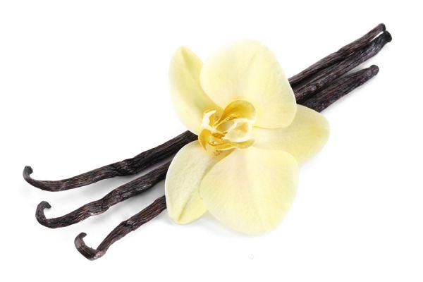 3 recetas fáciles para hacer esencia de vainilla casera. Ingredientes y preparación del extracto de vainilla. Esencia de vainilla casera