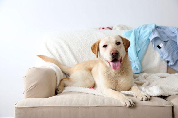 Cómo quitar el olor a perro. Consejos para eliminar el olor a perro de los ambientes. Claves para prevenir el olor a perro