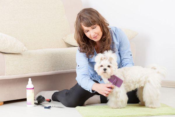 Tips para evitar el olor a perro. Consejos para prevenir el olor a perro. Métodos caseros para quitar el olor a perro en el hogar