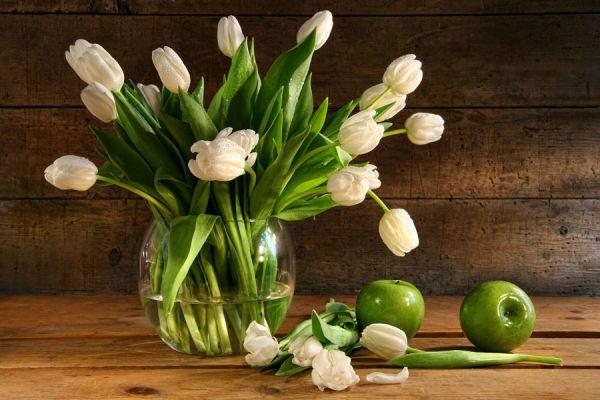 Especies para interiores con poca luz. Qué plantas de interior elegir para sitios con poca luz. Plantas para interiores con poca luz solar