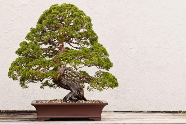7 principios esteticos del zen. Cómo aplicar en diseño los principios estéticos del zen y el wabi sabi