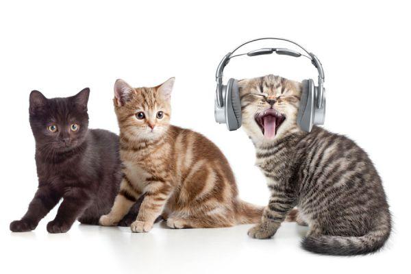 Cómo entretener a un perro. Cómo entretener a un gato. Sonidos para entretener a mascotas. Imagenes para entretener a mascotas