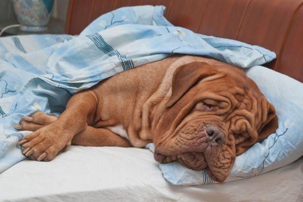 Motivos por los que puedes despertar cansado. Causas para despertar cansado. Cómo dormir mejor y no despertar cansado