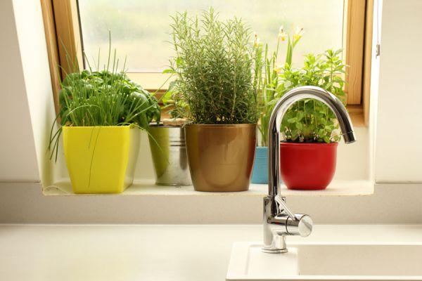 Plantas para ahuyentar moscas y mosquitos. 12 plantas para ahuyentar insectos. Hierbas y plantas que ahuyentas mosquitos naturalmente