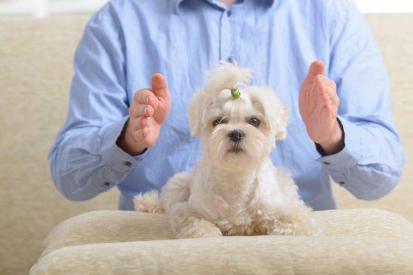 Cómo hacer reiki a las mascotas. Beneficios del reiki para animales. Cómo hacer reiki a un perro. Beneficios del reiki para los animales