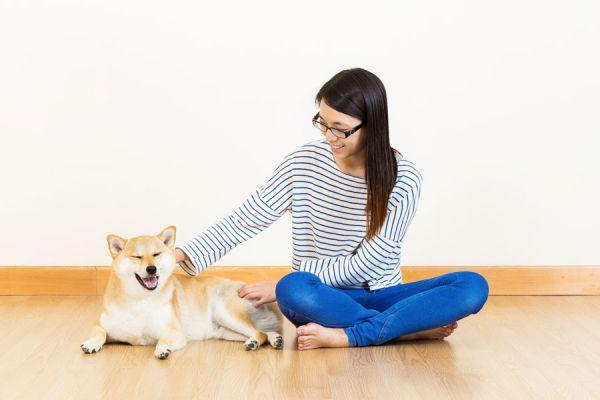 Masajes terapéuticos para mascotas. Cómo masajear a un perro. técnica de masajes terapéuticos para mascotas.
