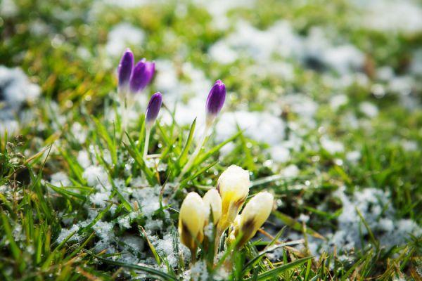 Plantas resistentes para el invierno. Cómo mantener el jardín en invierno. Plantas que resisten el invierno.