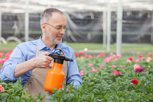 Beneficios del bicarbonato de sodio para el jardín. Usos del bicarbonato de sodio para el jardín. Cómo usar bicarbonato en el jardín