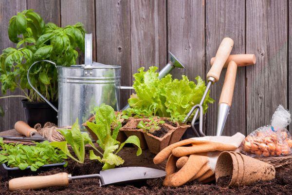 Para qué sirve el bicarbonato de sodio en el jardín. Usos prácticos del bicarbonato de sodio para el jardín. Cómo Mejorar el jardín con bicarbonato